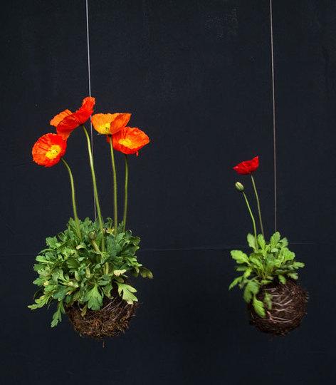 tien-loi-vuon-treo-cho-khong-gian-hep-7 Vườn treo cho nhà nhỏ hẹp