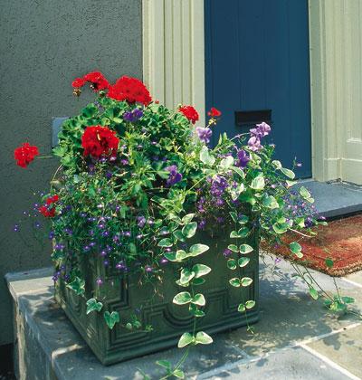 hoa-dep-ben-hien-nha-71 Đẹp với hoa và nắng ngoài ban công
