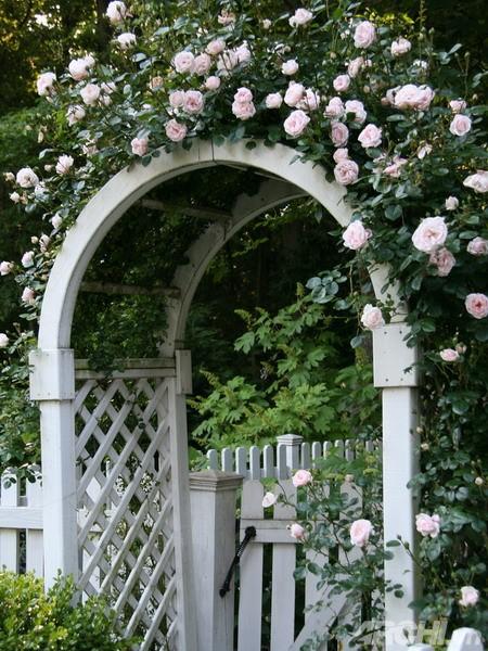 05 DOOL110805ThangMB01 Những chiếc cổng lãng mạn cho nhà vườn