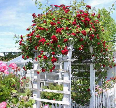 05 DOOL110805ThangMB05 Những chiếc cổng lãng mạn cho nhà vườn