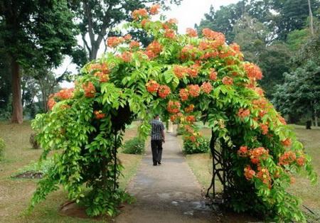 05 DOOL110805ThangMB11 Những chiếc cổng lãng mạn cho nhà vườn