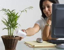 Trồng cây trong văn phòng